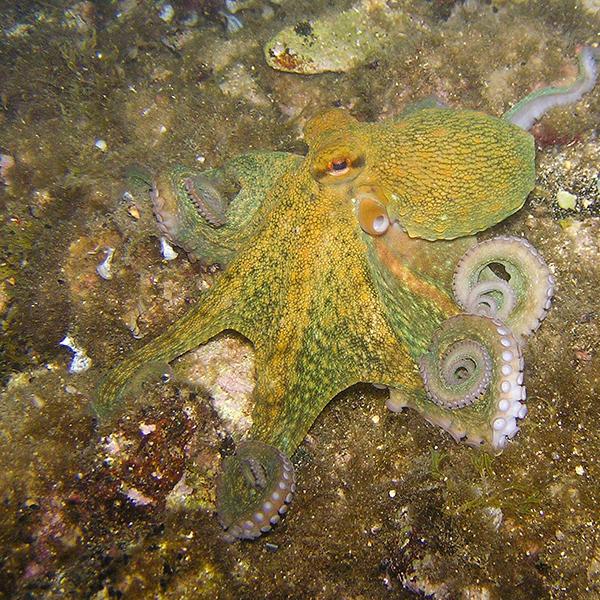 octopus-230009_1920