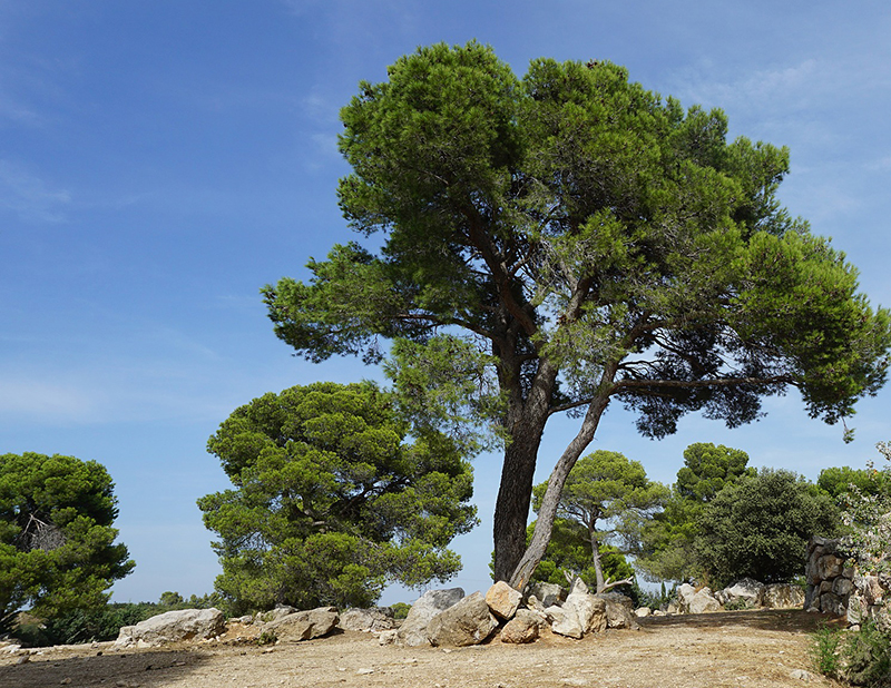 tree-2735177_1920